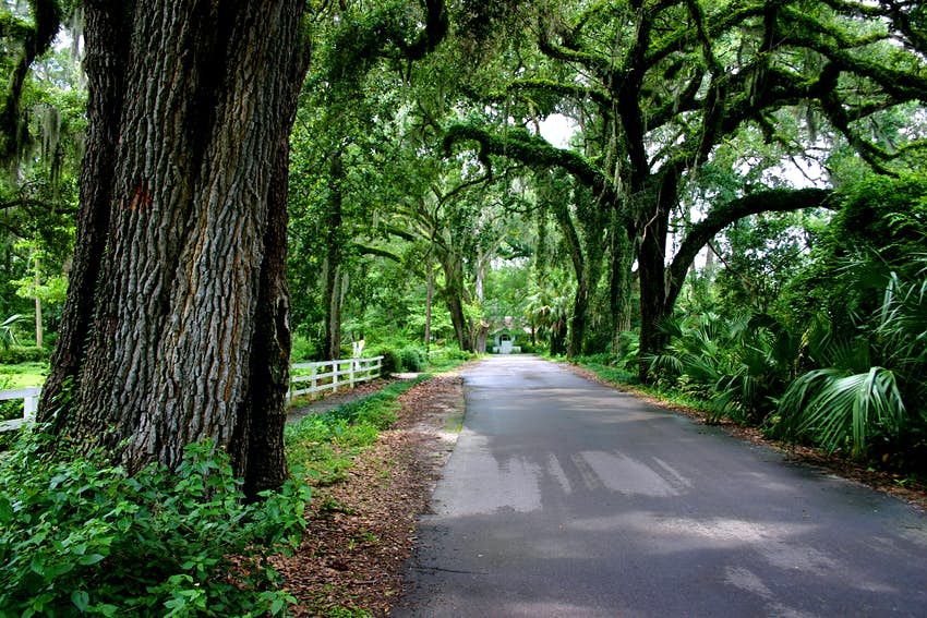 Shaded lane in an old Florida town.  Live oak trees with ferns, vines and Spanish moss. Country road.