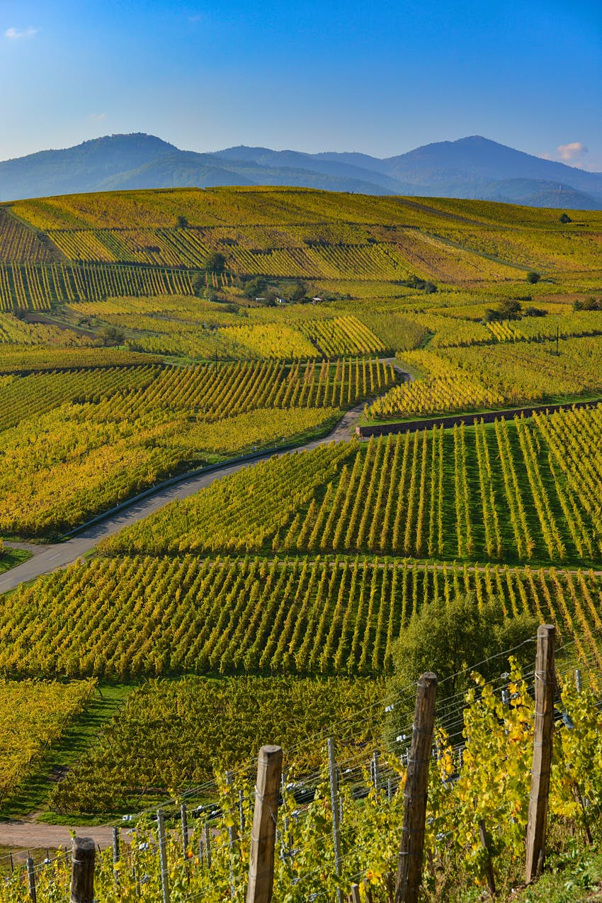 A road winds through hilly vineyards covered in neat rows of green vines