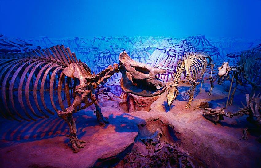 Dinosaur Exhibits at the Royal Ontario Museum in Toronto