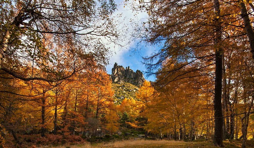 An autumnal view of the Serra da Estrela, with trees with red and brown leaves either side of a walkway leading to a rocky, jagged peak.