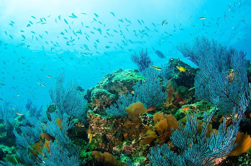 Coral reefs in the Sea of Cortez near Cabo Pulmo