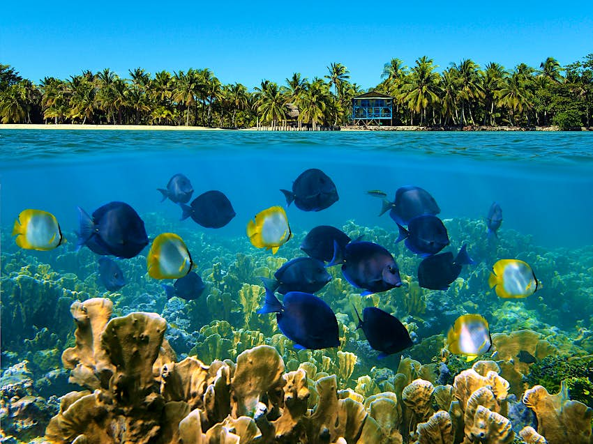 Coral reefs on a tropical island