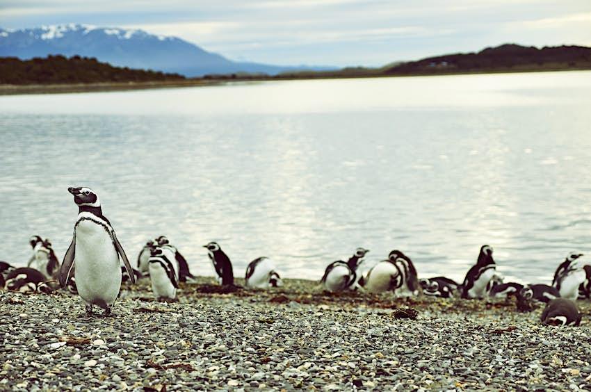 Pingüinos en una playa rocosa