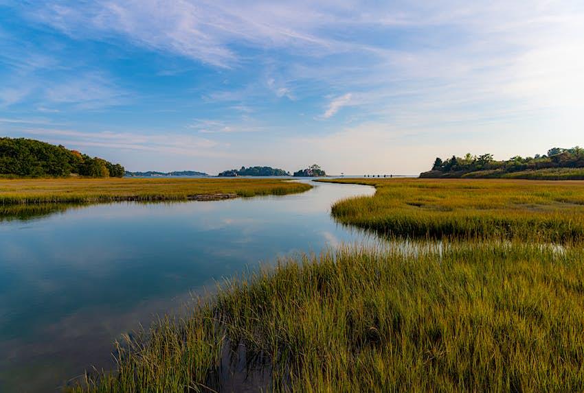 salt marshes at Connecticut's shoreline beaches