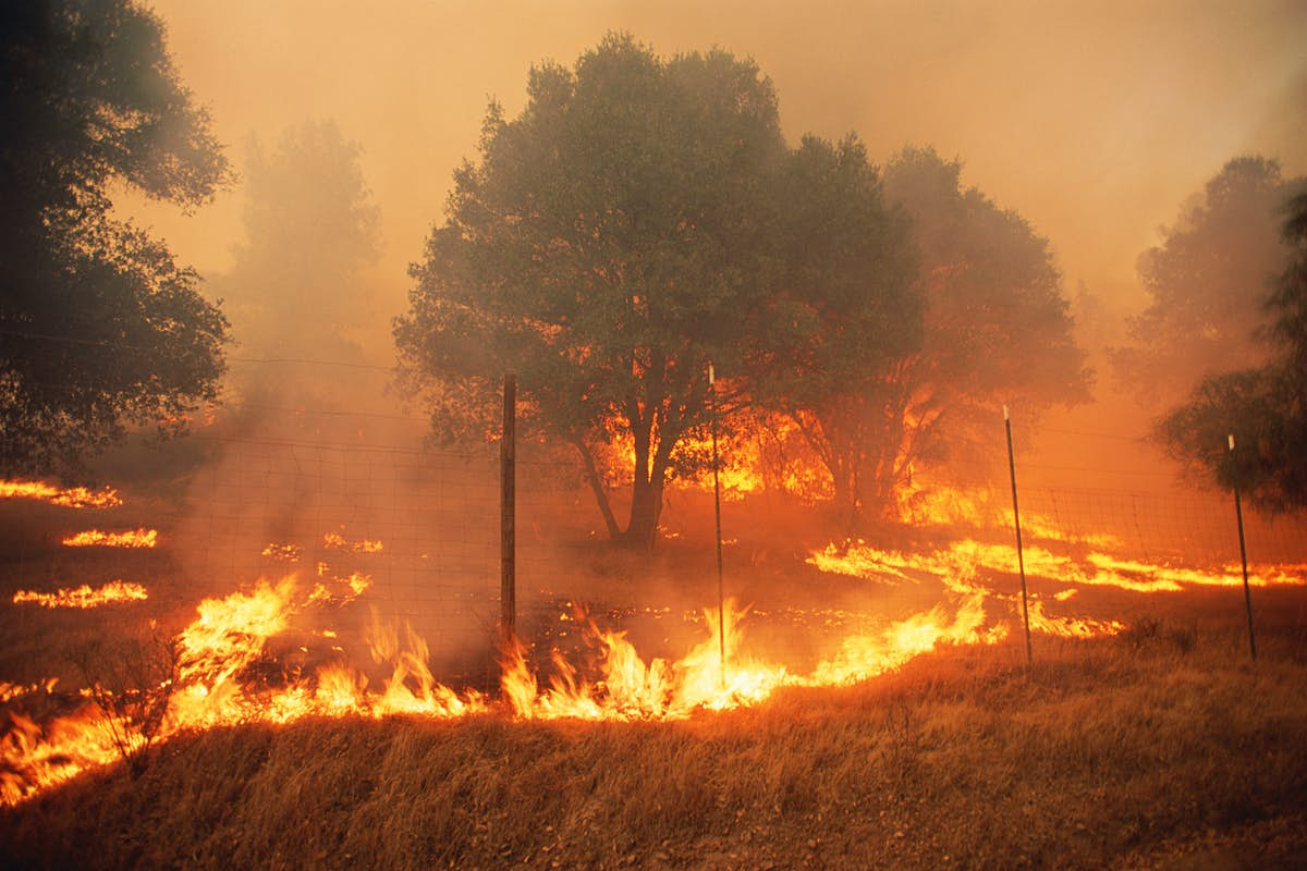 California's national forests close to visitors as wildfires rage