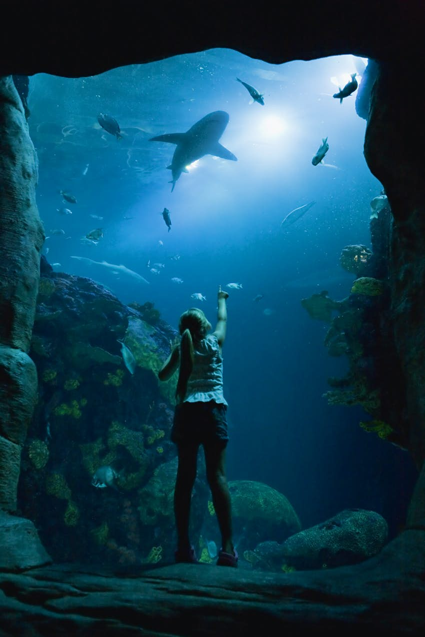 Tennessee Aquarium's Secret Reef is home to sand tiger sharks, bonnethead sharks and green sea turtles