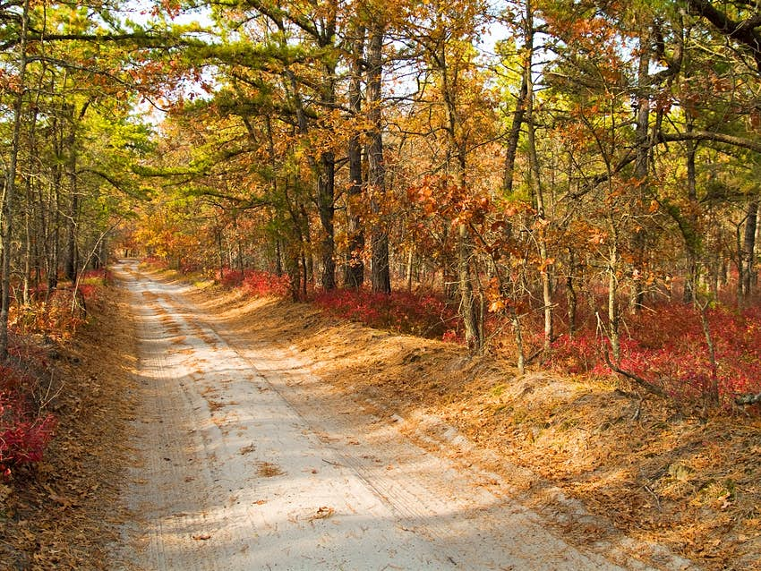 A dusty road runs through fall trees in Pine Barrens, New Jersey