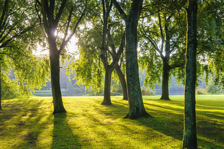 Sun shining through green trees in a large park