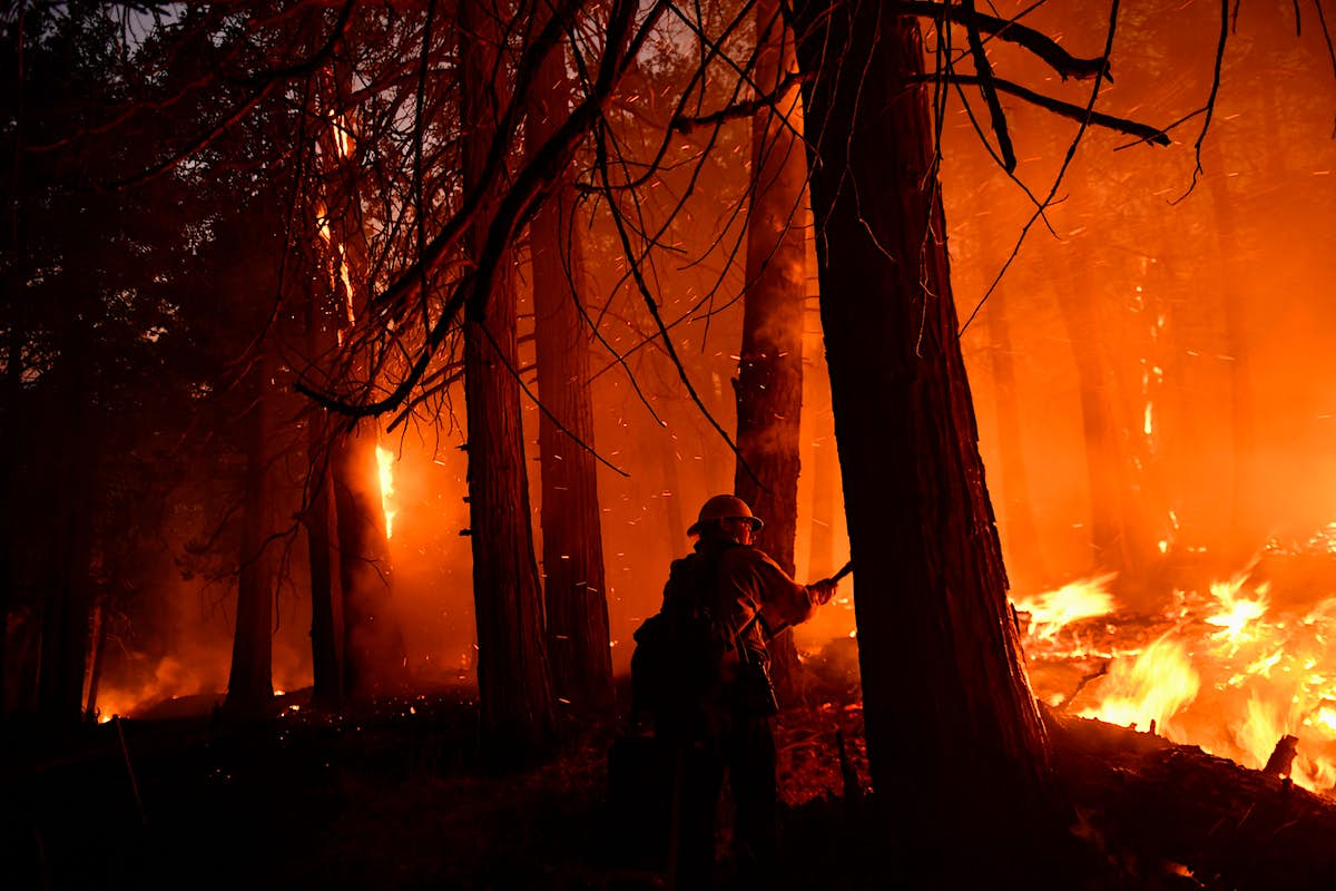 World's largest tree at risk as wildfires tear through California