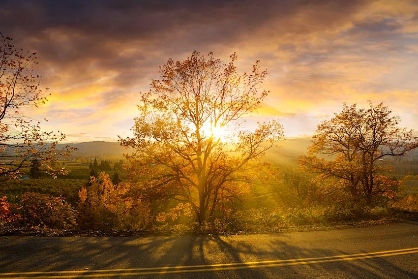 Sonnenschein durch Bäume an einem Herbsttag bei Sonnenuntergang am Hood River