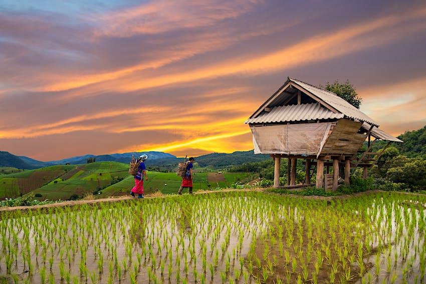 Mujer hmong cargando sobre sus espaldas con campos de arroz con terraza en el fondo, Chiang Mai, Tailandia.