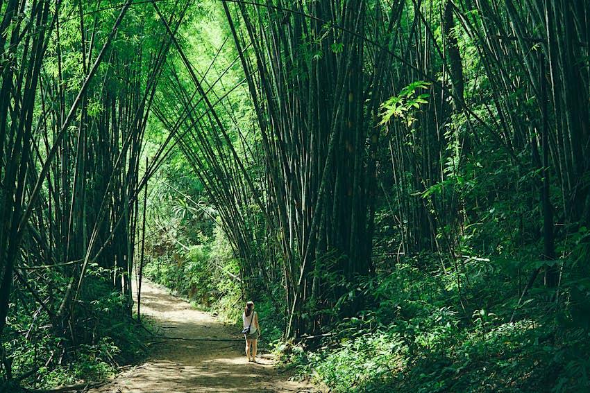 Una niña explorando el bosque de bambú en el Parque Nacional Khao Sok, Tailandia.