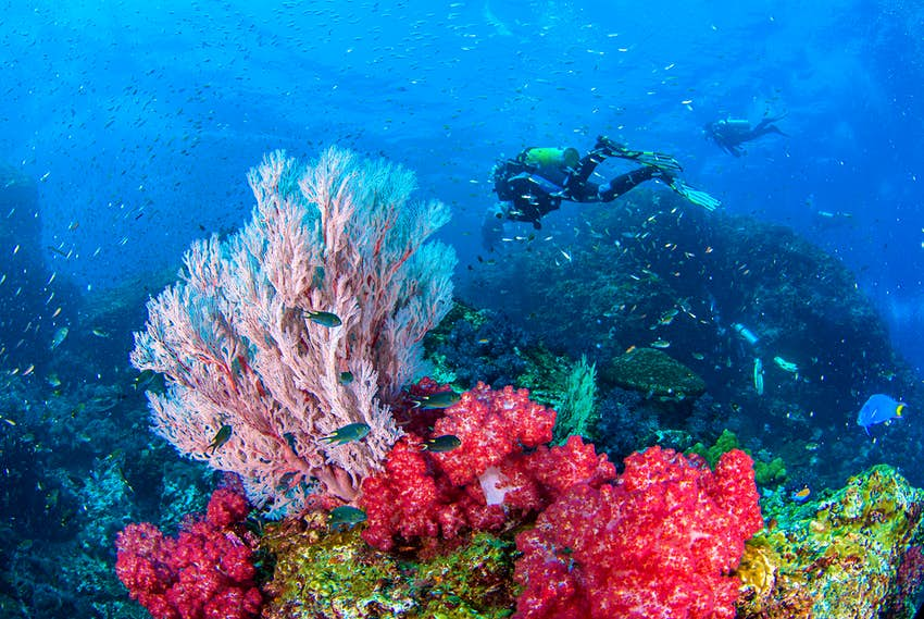 Un buzo nada cerca de coloridos y vibrantes corales marinos en Tailandia.