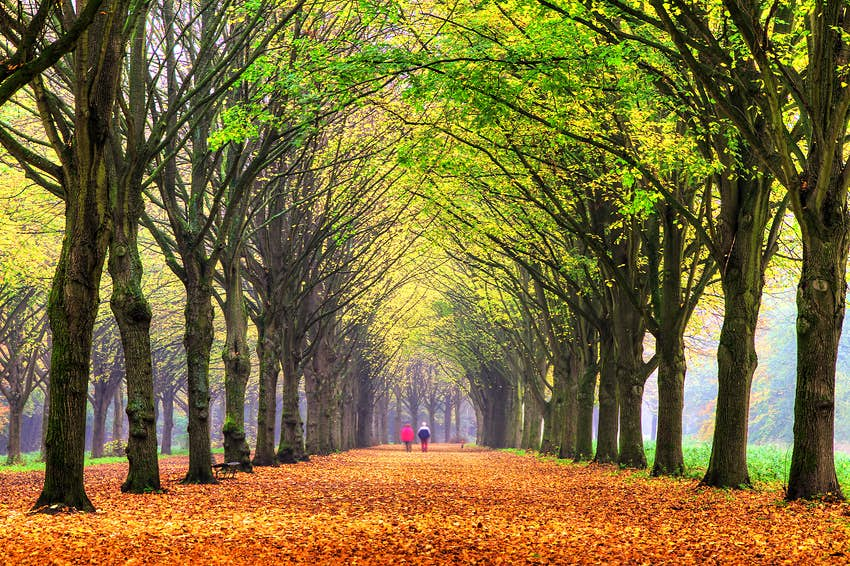 A couple walks under a tree-lined path with fall colors on the leaves above