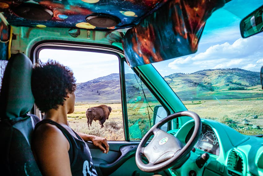 Woman looking out van window at bison in Yellowstone