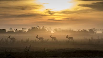 Spotlight on: Botswana adventure safari