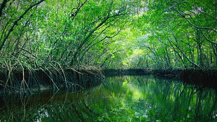 Spotlight on: the Everglades, Florida