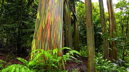 The world's most colourful natural wonders