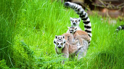 When to go to Madagascar
