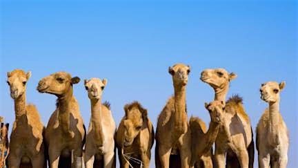 Introducing Oman, UAE & Arabian Peninsula
