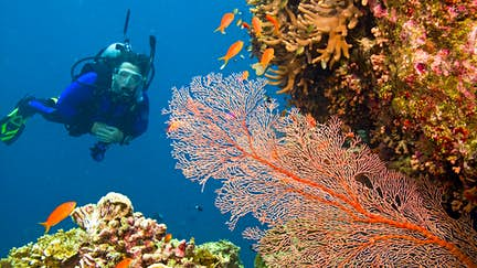 How to help save the world's coral reefs
