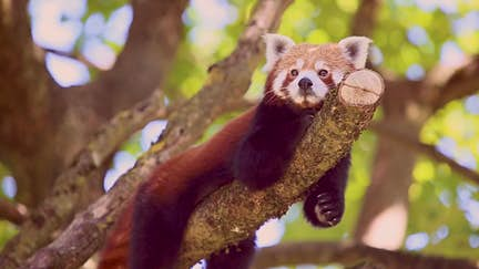 The planet's cutest animals (and where to find them)