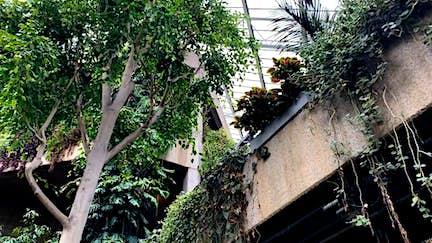 London's secret urban garden