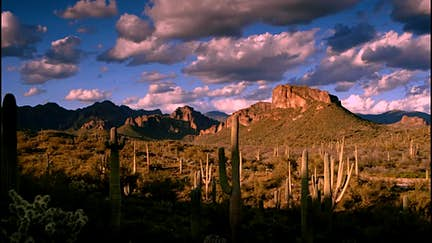 Things you can't miss in Tucson