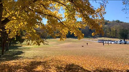 Back to nature in Nashville's Percy Warner Park