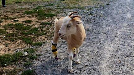 Meet the animals of The Gentle Barn