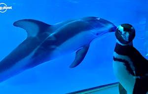 Penguins run amok in Chicago aquarium