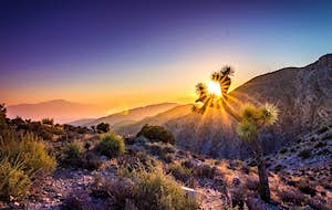 Discover the surprising wonders of Joshua Tree National Park