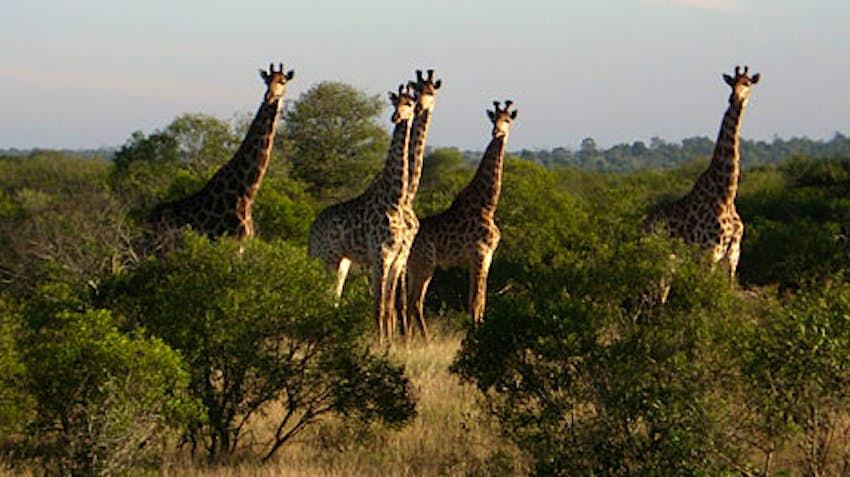 Kruger Kruger Name