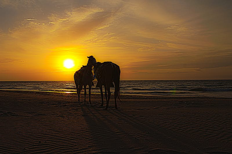 Two horses stand on a beach, backlit by the sunset © Cristhian Fermin / shutterstock