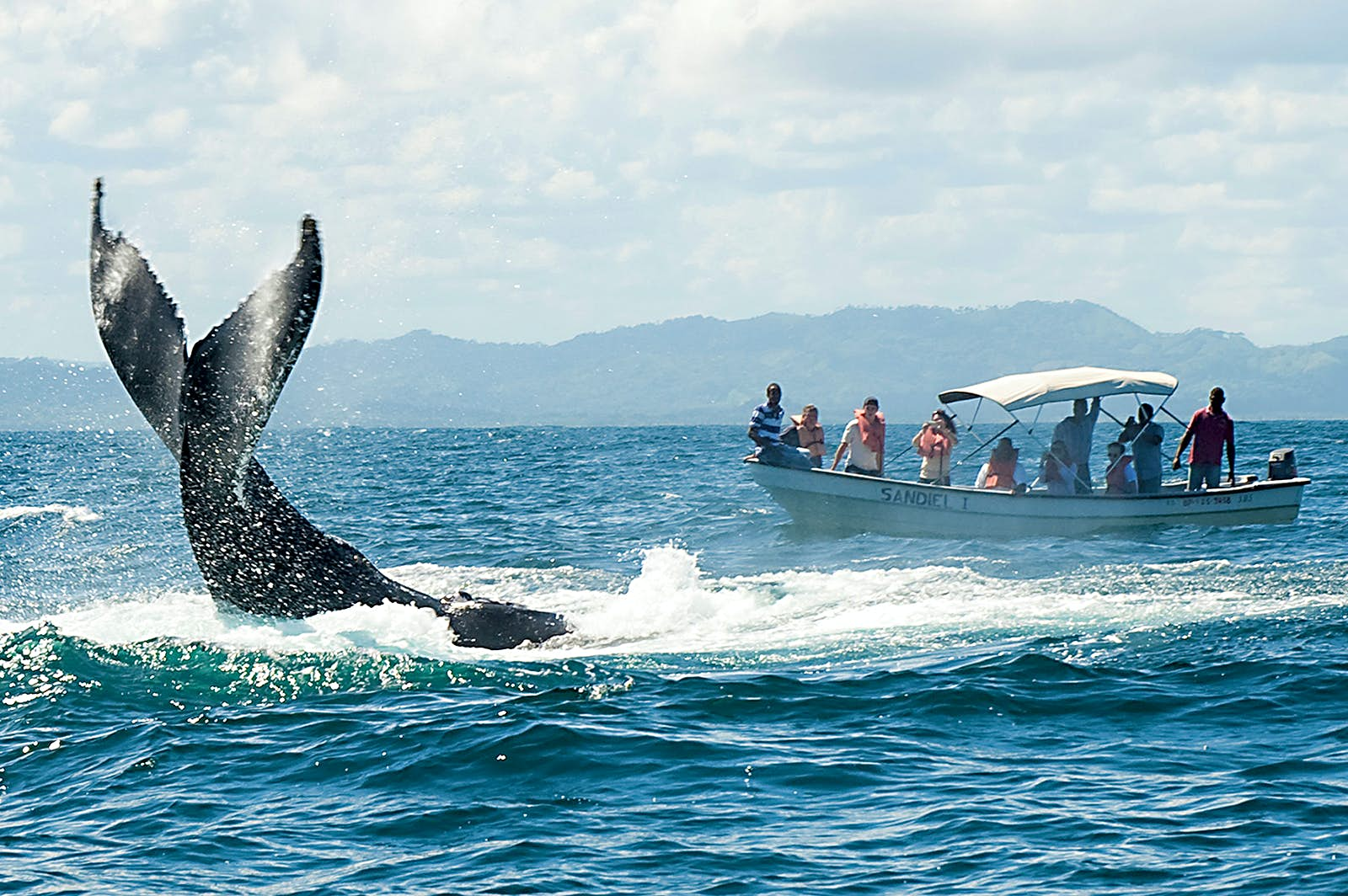 Features - Caribbean. Dominican Republic. Samana Peninsula. whale watching in Samana Bay