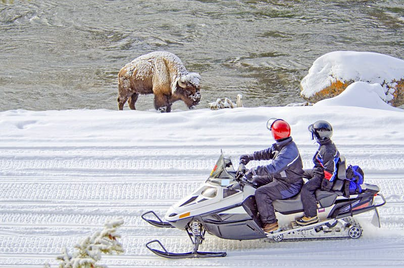 Two snowmobilers in full winter gear and wearing helmets pause on a snowy track to watch a bison