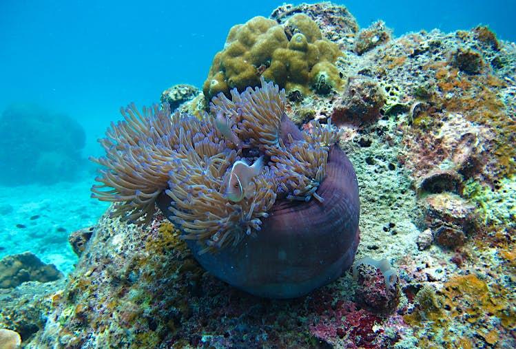 Diving, Ko Tao, Thailand. Image by David Rubin CC BY 2.0