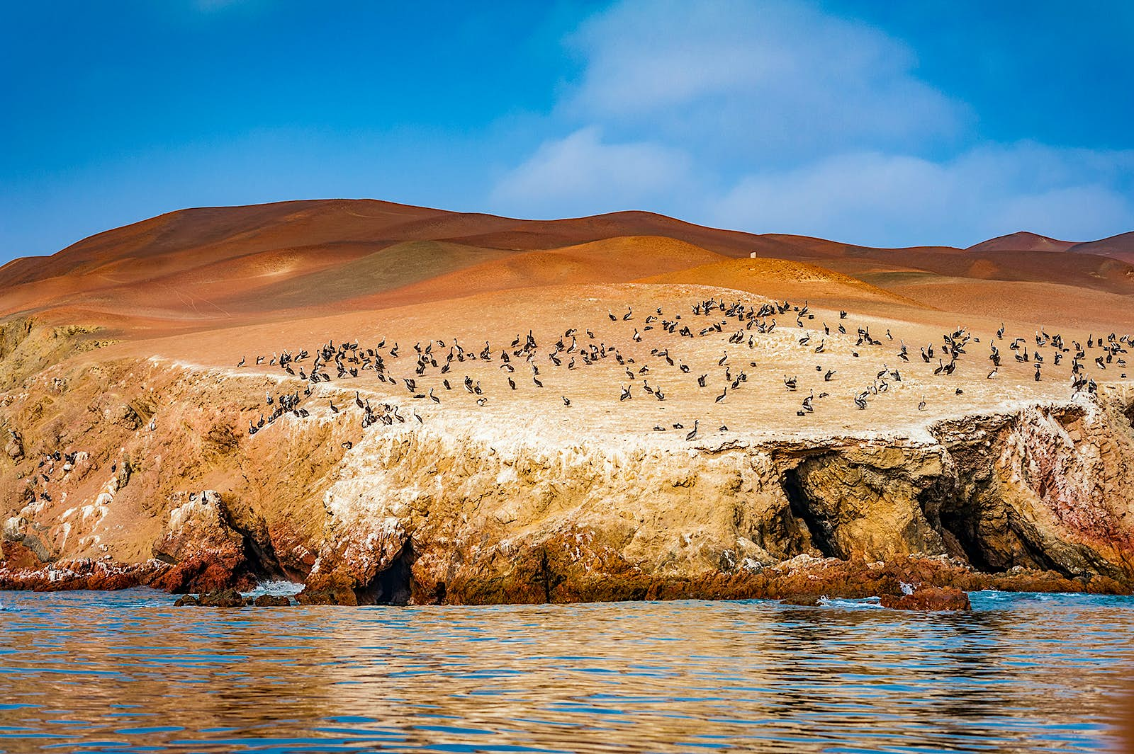 A photo from the water looking at a rust colored, desert coastline dotted with birds. The landmass is framed by a blue sky and rippling water.