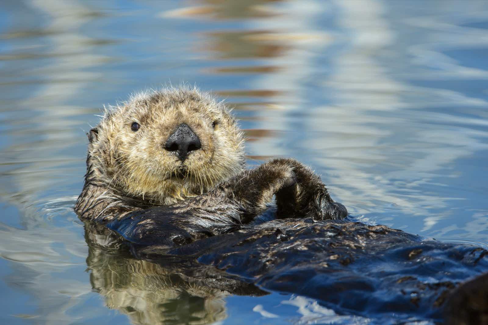Watching wildlife along California's coast