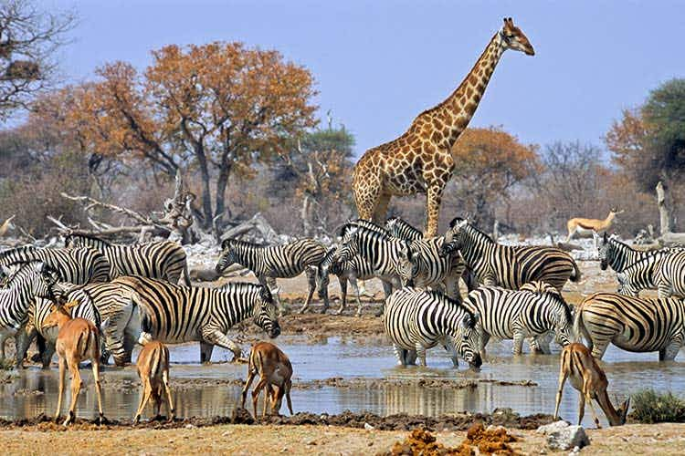African safari alternatives that don't cost a fortune