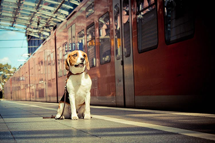 Leave him in a happy place - in this case, the station platform. Image by Benita Hartmann / Moment / Getty Images