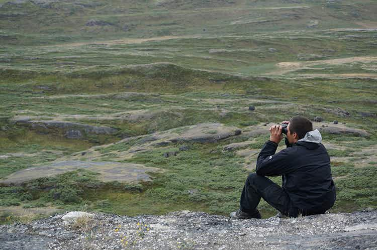 On the trail of the muskox in Greenland's great wilderness