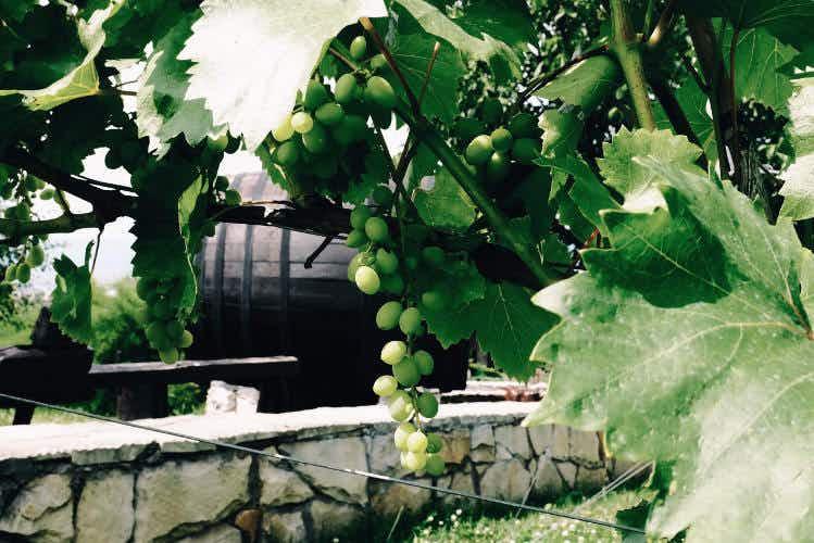 Wine-tasting in Moldova: a trip to the grape unknown