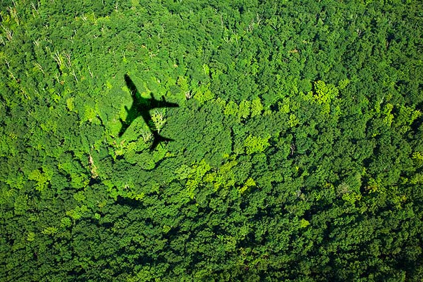 Carbon offset programs can help fund reforestation. Image by homas Jackson / Stone / Getty Images