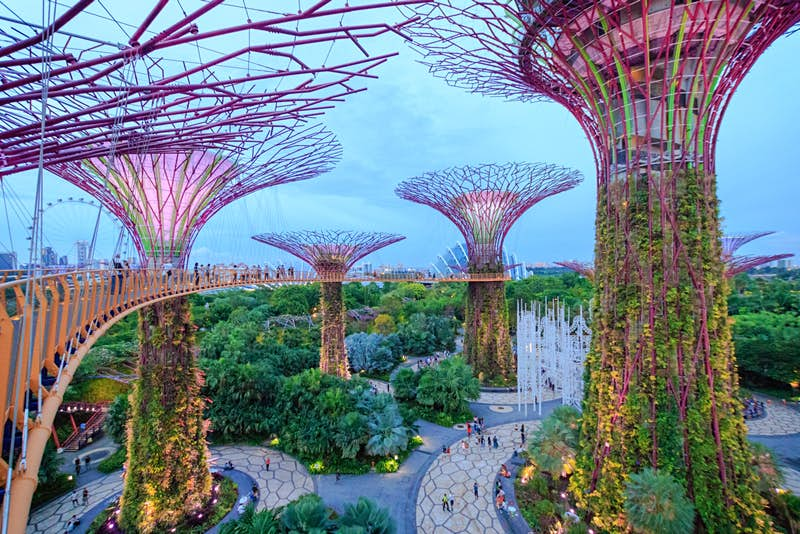 A view from the Supertree Grove walkway at Gardens by the Bay, Singapore © FuuTaMin / Shutterstock
