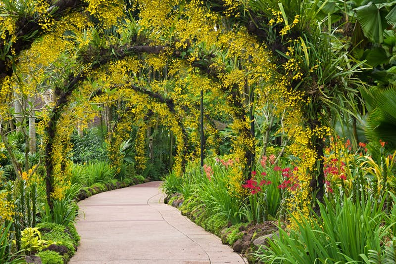 A botanical canopy in the Singapore Botanic Garden © Janelle Lugge / Shutterstock