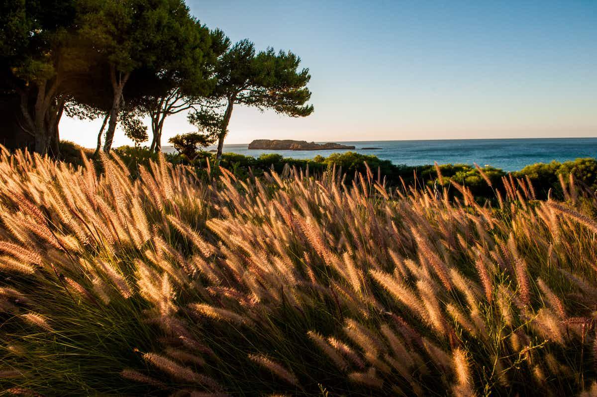 The Algarve's wild western coast