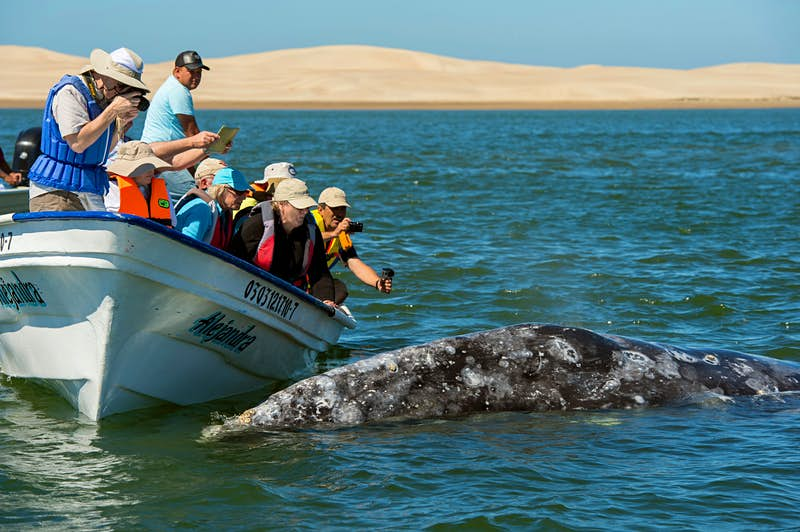 Top 10 things to do in Cabo San Lucas - Lonely Planet