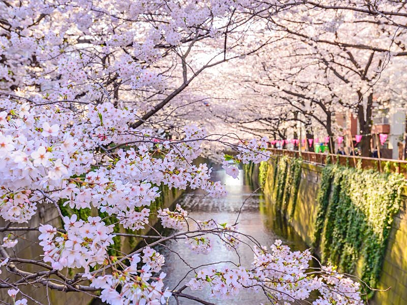 Tokyo in spring: the best things to see and do - Lonely Planet