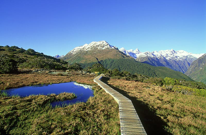 Scenic day-long hikes: walking in New Zealand